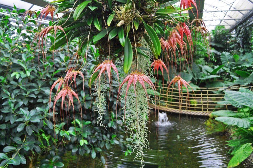 Orchideenwelt Raffeiner in Gargazon