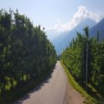 Radweg Vinschgau - Göflan - Naturns - 1